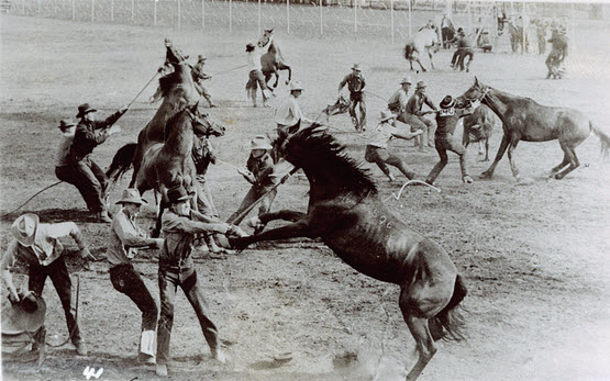 mobile-seo-apocalypse-horses